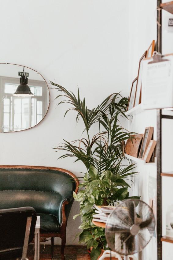 white living room green plant bookshelve
